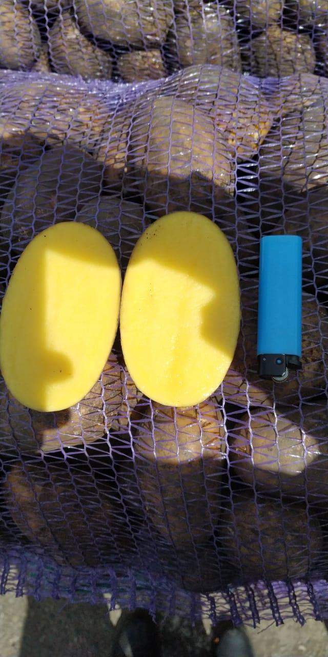 Картофель оптом: Импала